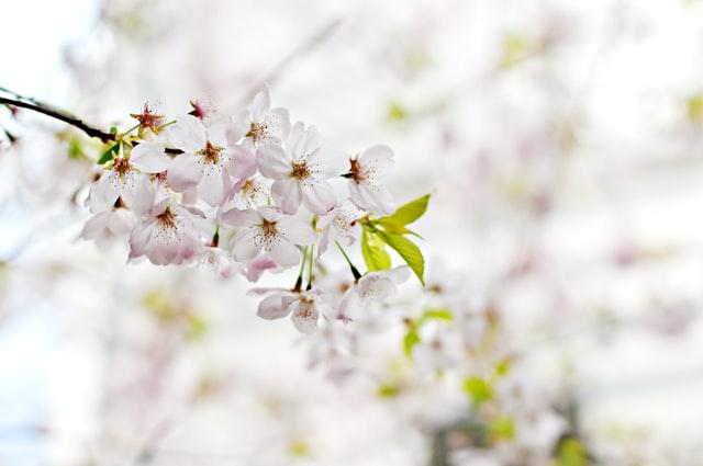 """""""White Blossom"""" by Scott Webb."""